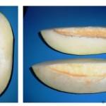 Описание плодов дыни
