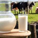 Состав и польза молока коровьего