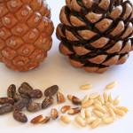 Какие орехи лучше выбирать
