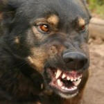 Садки у собак — почему они делают это